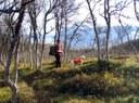 Stand i skogen