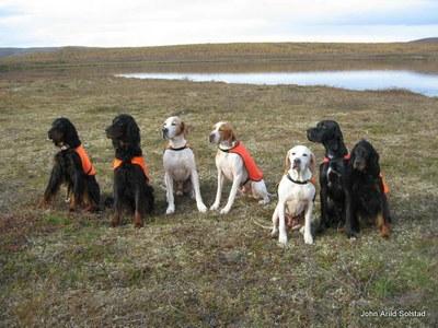 Alle hundene